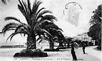Promenade de la Croisette Allée de Palmiers